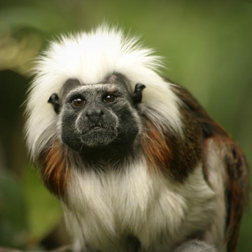 Большинство животных джунглей живет в