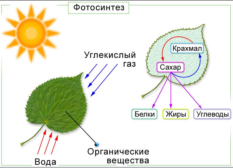 Растения «дышат» углекислым