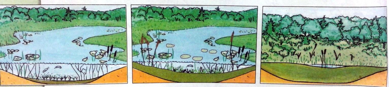 болото рисунки: