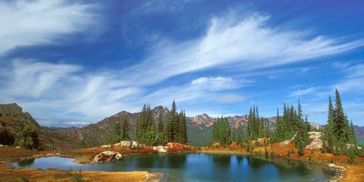 Интернет урок по окружающему миру «Экосистема озера»