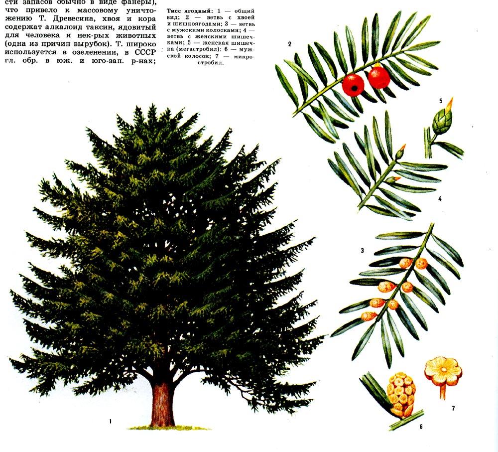 презентация деревья и кустарники для детей