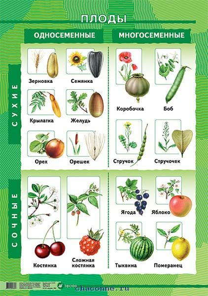 Интернет урок по окружающему миру Многообразие растений Школа 2100 окружающий мир Интернет урок интересное видео 3 класс