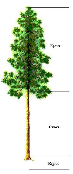 Интернет урок по окружающему миру Экосистема леса экология Школа 2100 окружающий мир Интернет урок видео 3 класс