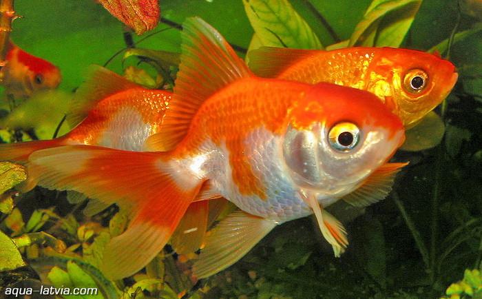 Интернет урок по окружающему миру Экосистема аквариума Школа 2100 окружающий мир Интернет урок видео 3 класс