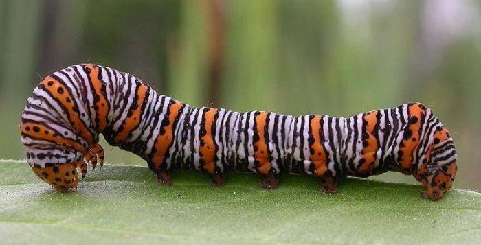 Интернет урок по окружающему миру Многообразие животных.Насекомые окружающий мир Интернет урок видео 3 класс