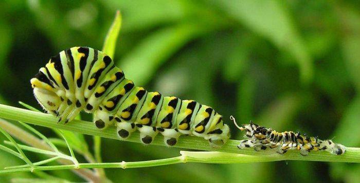Мир насекомых видео 7 фотография