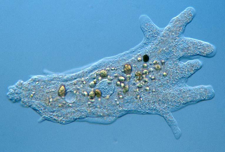 как обнаружить паразитов в организме человека лечение