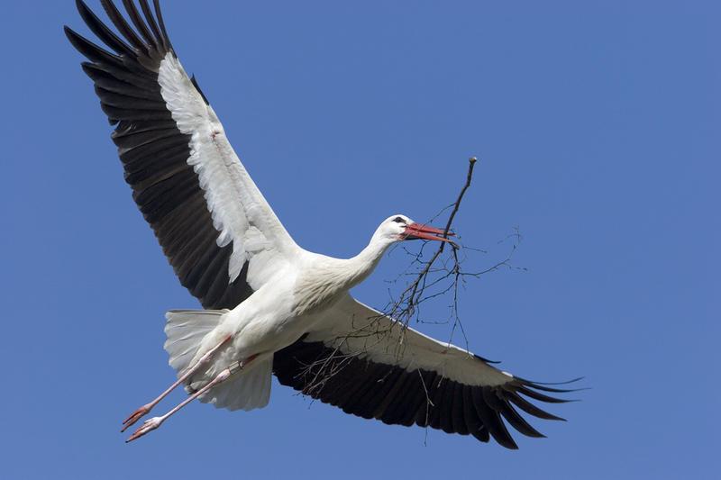 У лесных птиц крылья более короткие