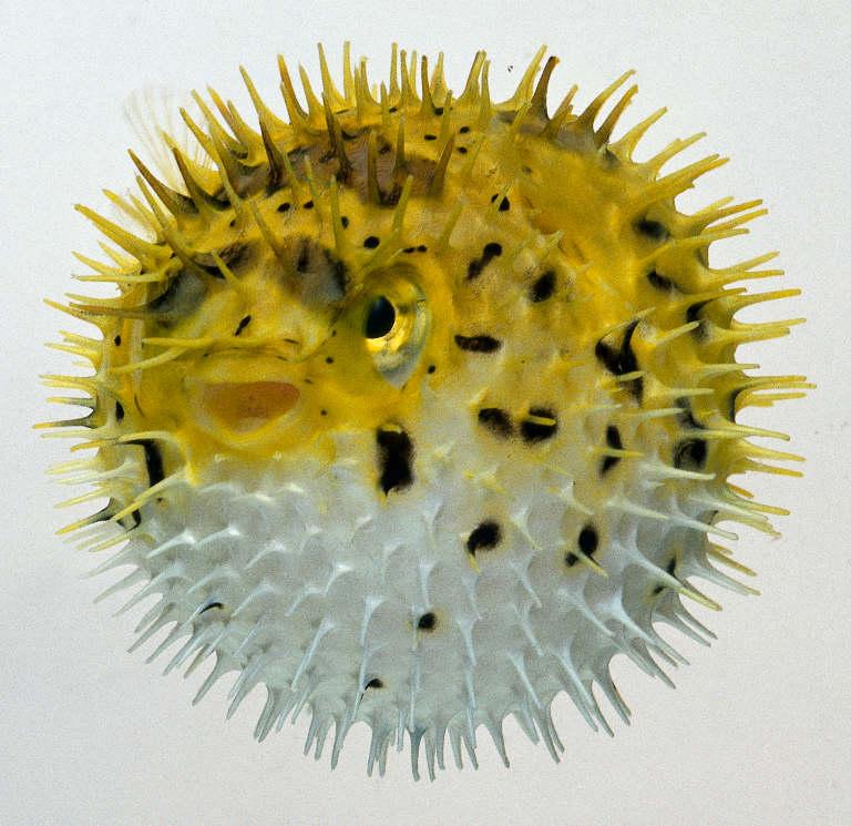 Интернет урок по окружающему миру «Многообразие животных.Рыбы окружающий мир Интернет урок интересное видео 3 класс