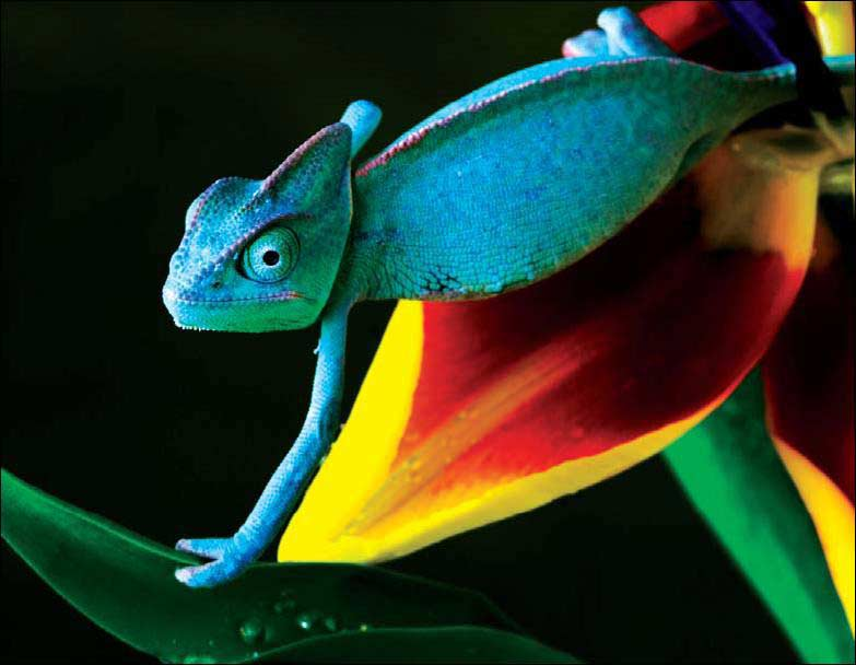 Интернет урок по окружающему миру Многообразие животных. Пресмыкающиеся окружающий мир Интернет урок видео 3 класс