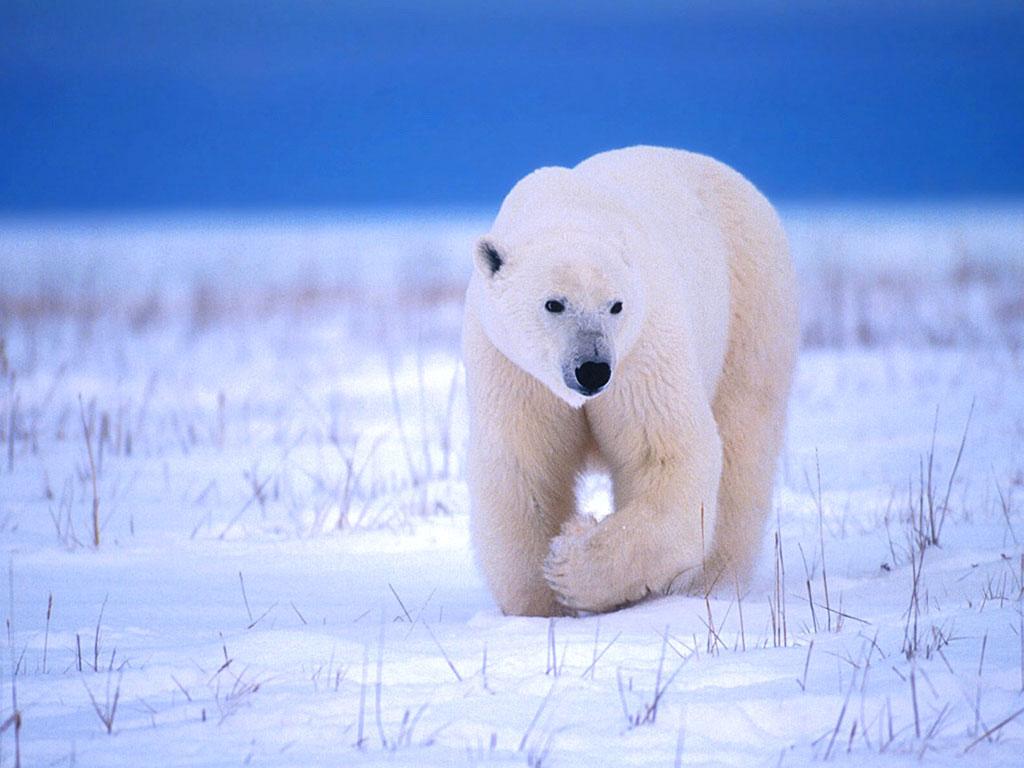 Интернет урок по окружающему миру «Многообразие животных. Млекопитающие» окружающий мир Интернет урок интересное видео 3 класс