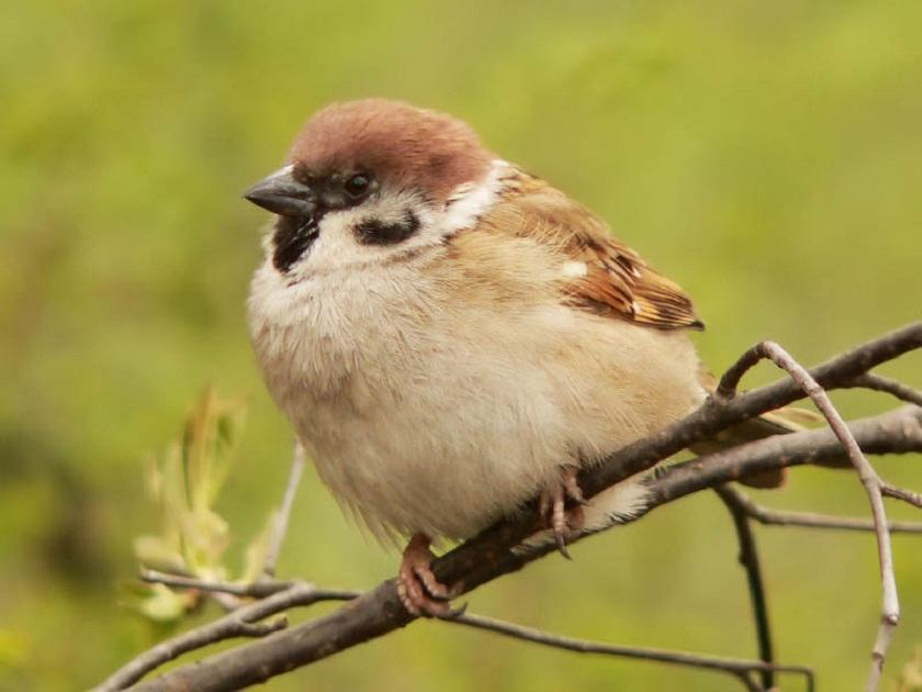 Интернет урок по окружающему миру Многообразие животных. Птицы окружающий мир Интернет урок видео 3 класс