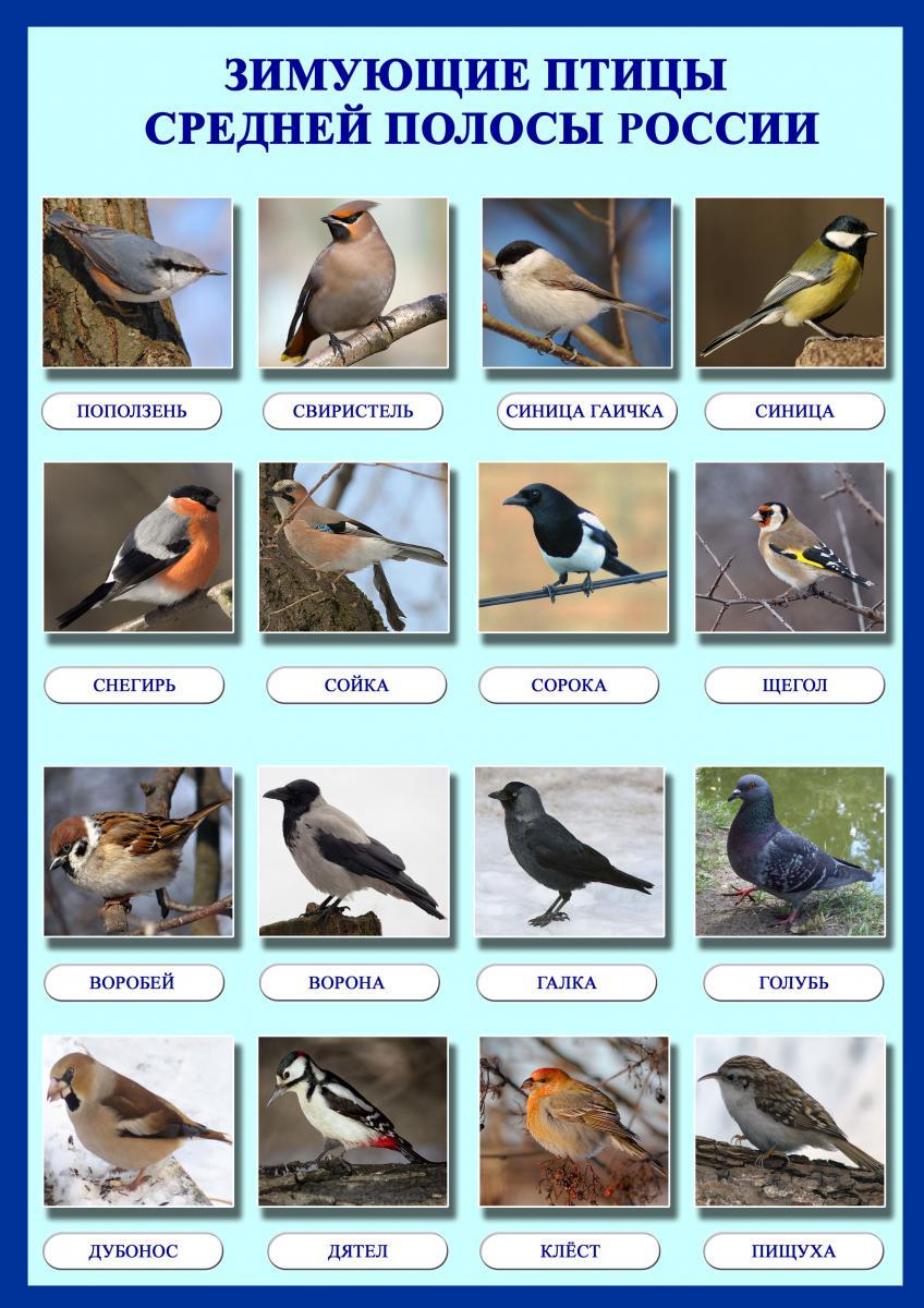 Птицы картинки для детей - Поделки