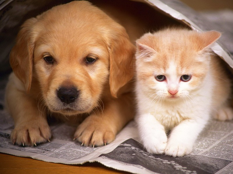 wallpapers_cats_451