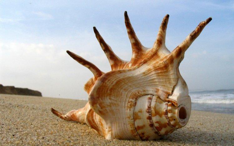 shells_32
