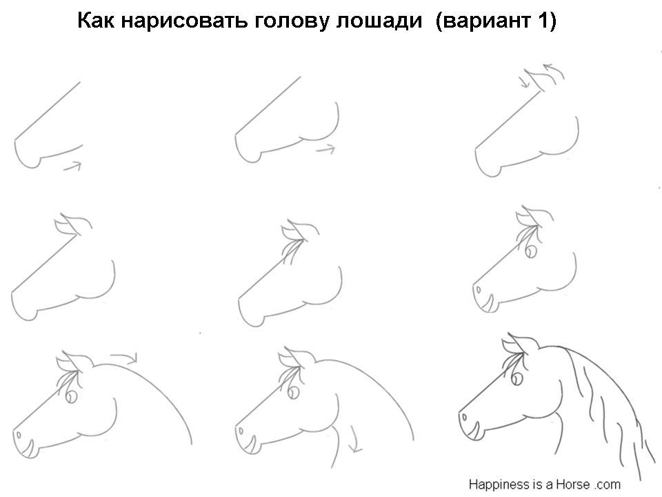 kak-narisovat-golovu-loshadi-variant-1