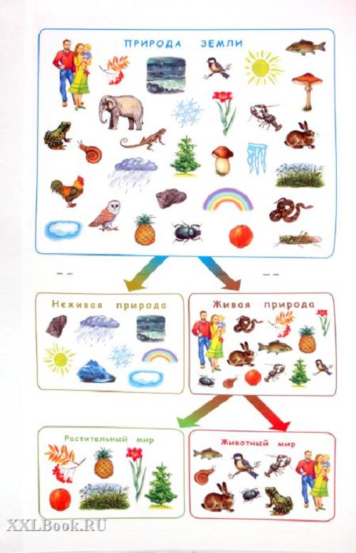 Игры на познавательное развитие дошкольников