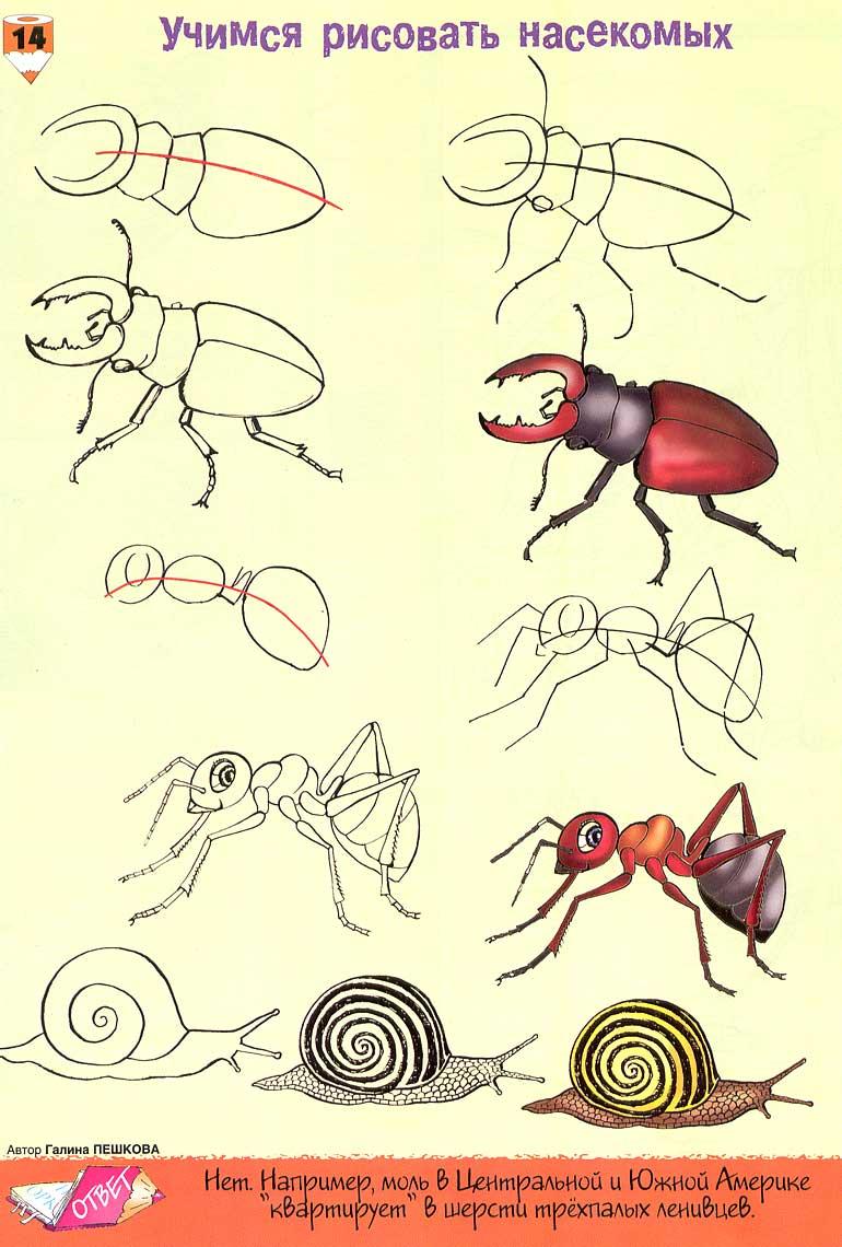 Как нарисовать насекомого поэтапно