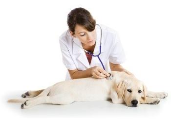 1369234127_priem-veterinara11