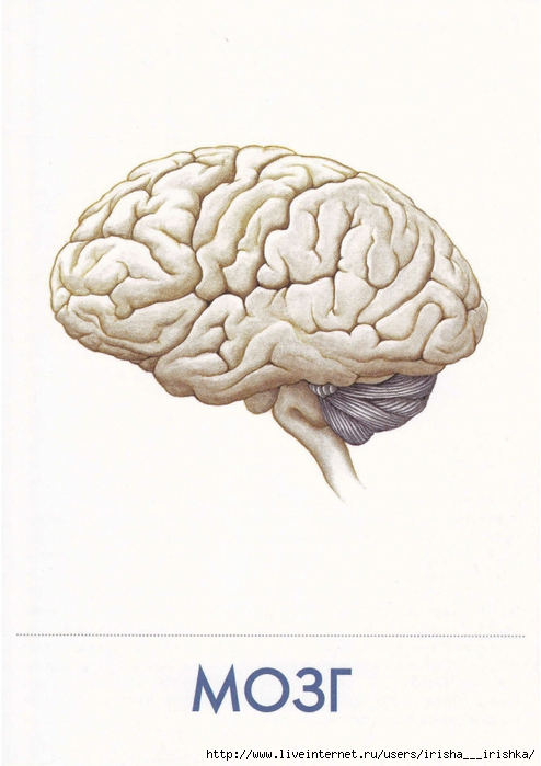 картинка с мозгами и надписью мозги могут